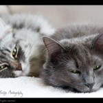 Axl & Rose, de eigen katten van Yvon ©Yvon Life in Focus Photography